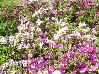 園内で咲いている花