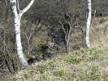 木道のかなり下に川が流れている