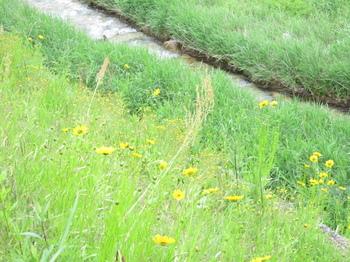 道の駅裏手の土手に咲く黄色の花