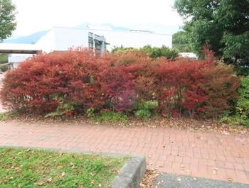 小黒川PAは紅葉が始まっていた