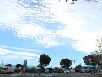 見上げると鱗雲