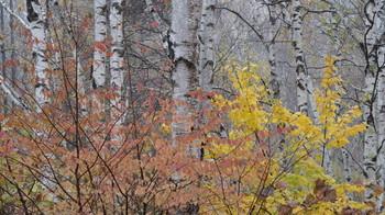 白樺林で撮影