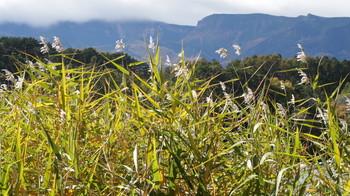 松原湖周辺の草