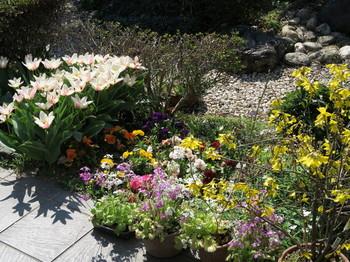 庭に咲く花々