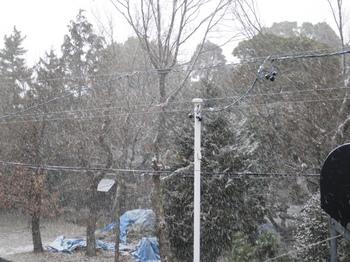 1月24日夕方に降り出した雪