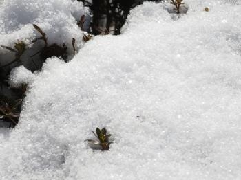 太陽光で輝く雪の表面