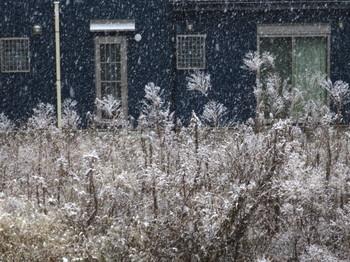 降り出した雪
