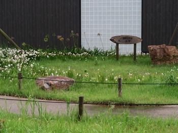 遠州森町PAの庭に咲く花