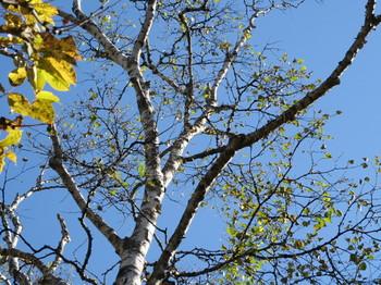志賀高原・一池近くの木