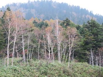 志賀高原・国道292沿いの斜面で