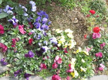 小さな花壇の花