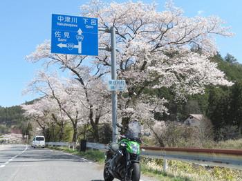 ER-6nと桜