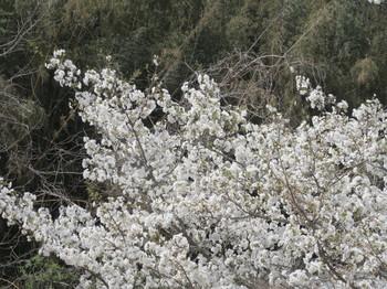 フルーツパークで咲いていた花