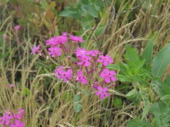 堤防に咲く花