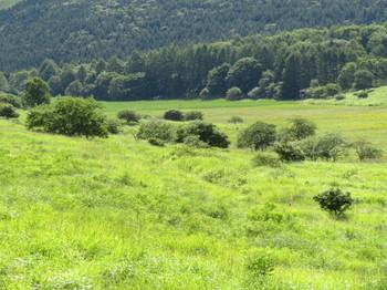 朝の踊場湿原