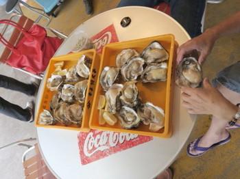 岩牡蠣は大人の掌ほどある
