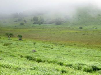 霧がかった踊場湿原